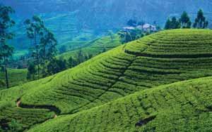 9-Day Pure Beauty Of Sri Lanka